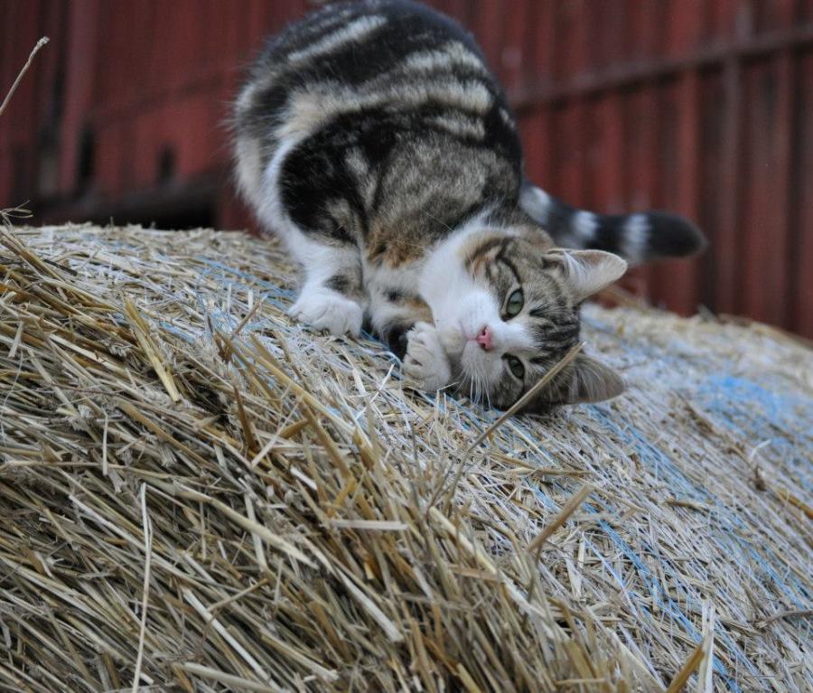 katt-jpg
